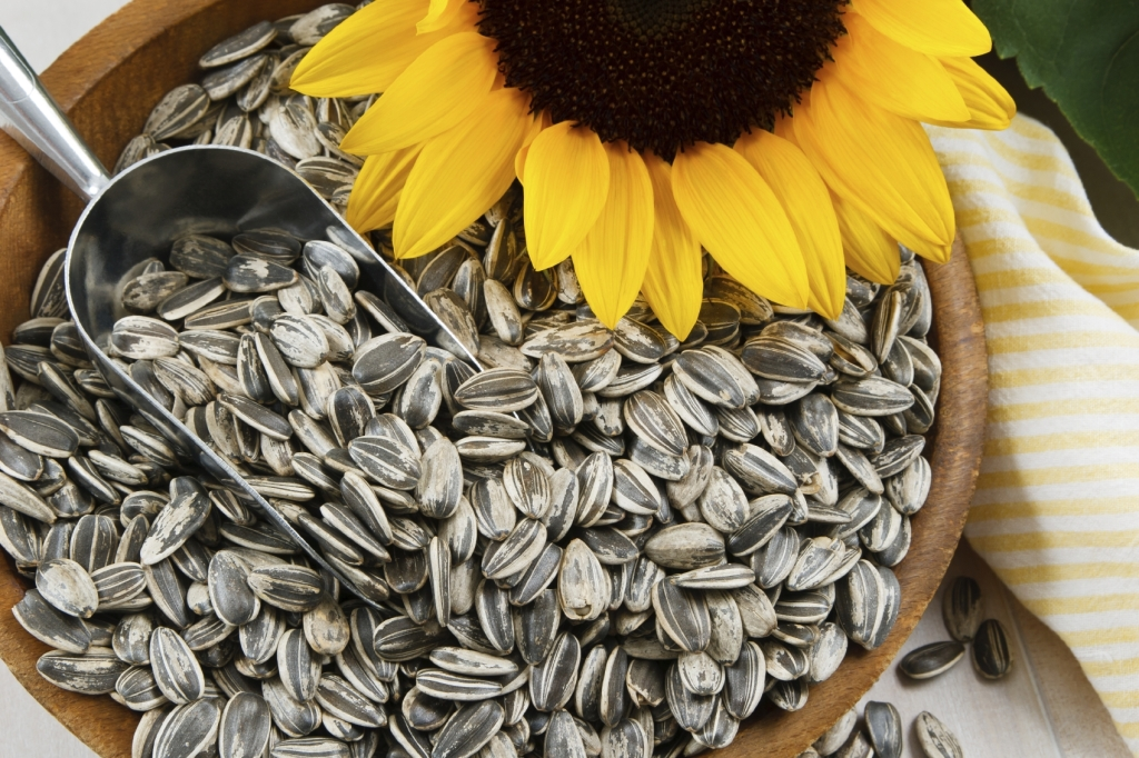 sunflowers seeds
